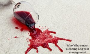 Red wine stains on beige carpet -Who Who Carpet Cleaning and Pest Management