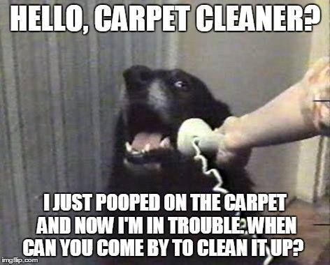Dog with the phone asking carpet cleaner brisbane to come and help clean up the mess