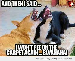 Two dogs laughing saying i will not pee on the carpet again, carpet cleaning brisbane meme