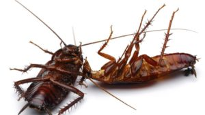 Cockroach Infestation: Types and Prevention Tips