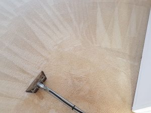 Beige Carpet Cleaning in Brisbane by Who Who Carpet Cleaning and Pest Management